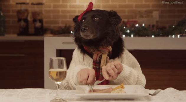 Cão comendo com mãos humanas