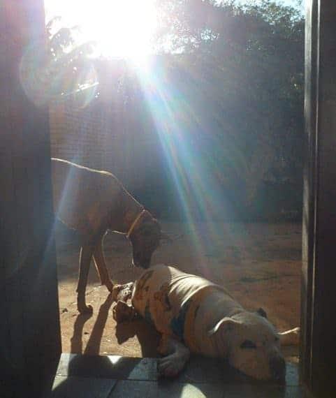 Cães tomando banho de sol - frio
