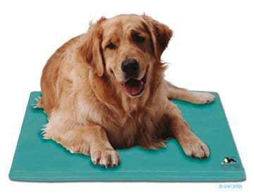 cão sobre tapete refrescante