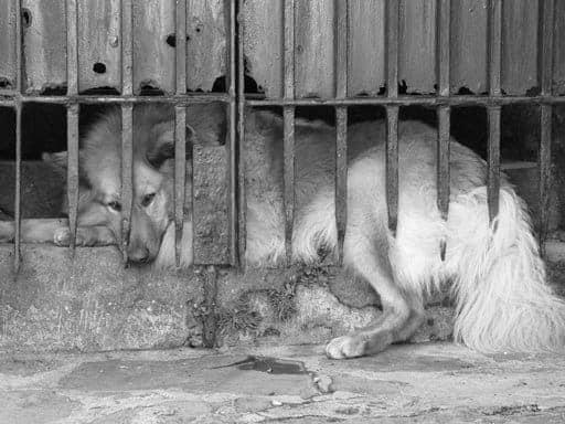 cachorro preso em jaula