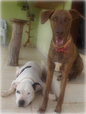 Paxa e Cookie