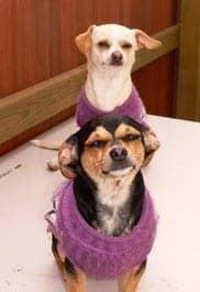 cães usando blusas - idoso
