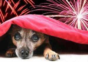 Cão escondido - fogos de artifício