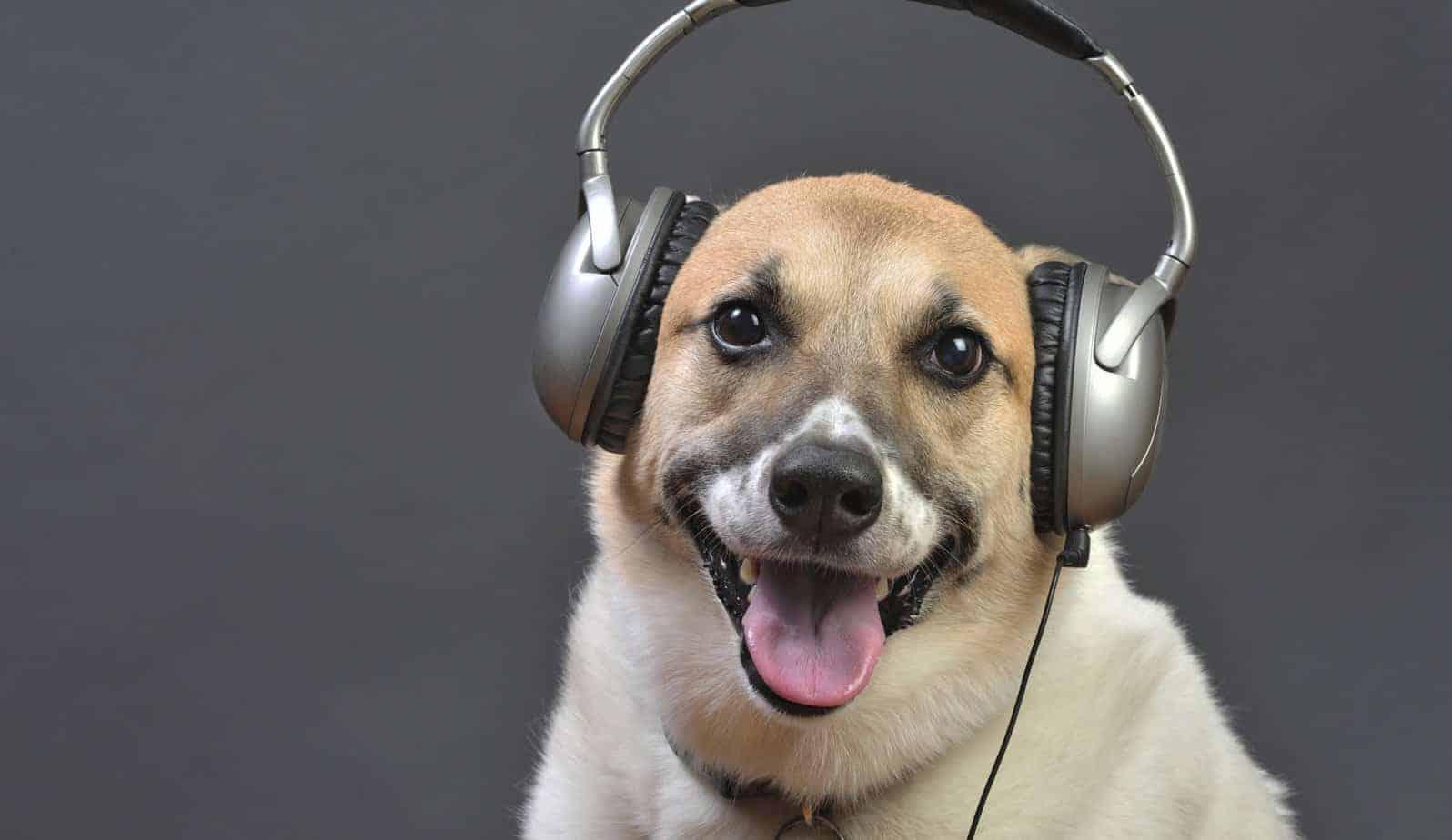 cão fones de ouvido