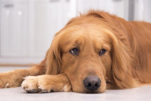 Imagem: I Heart Dogs.com