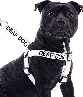 cão surdo com peitoral