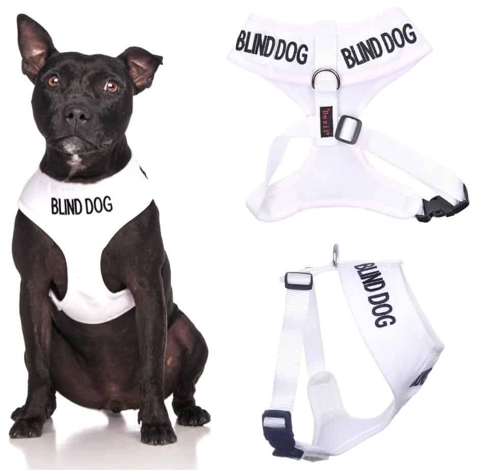 Peitoral para cães cegos, vendida nos EUA.