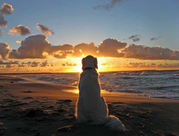 cão vendo o sol no mar