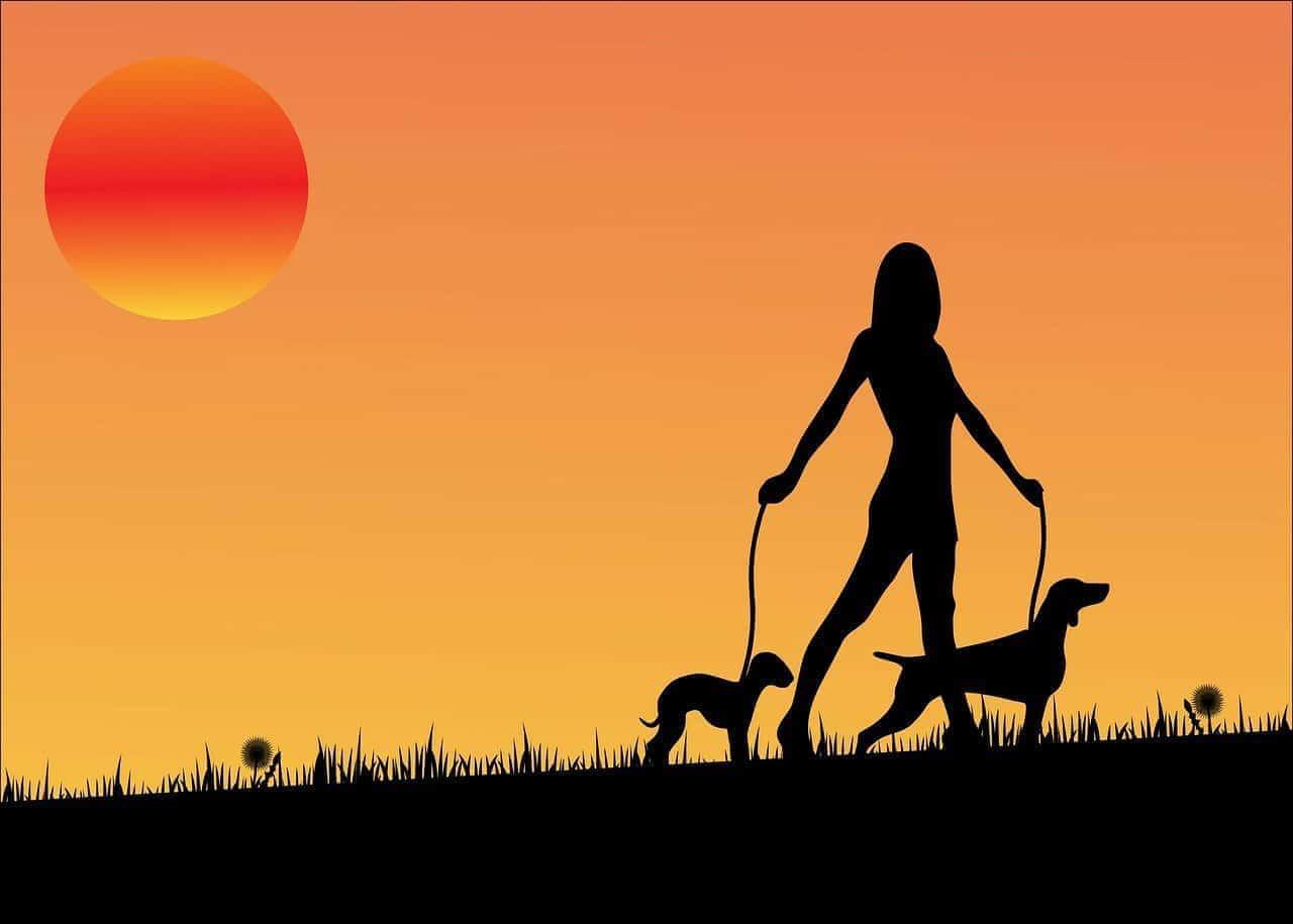 Mulher passeando com cães ao por do sol