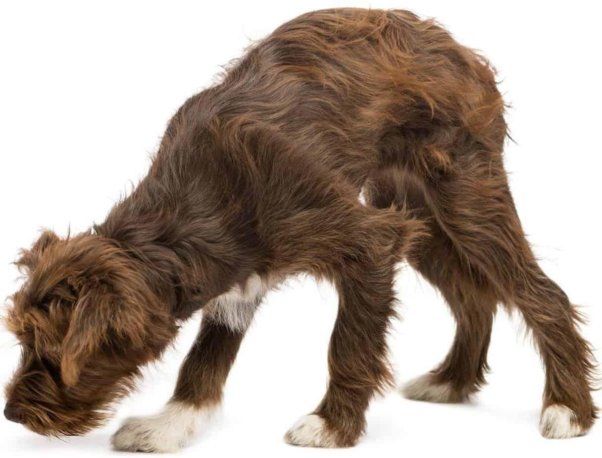 O olfato deve ser estimulado em cães surdos e cegos. Imagem: Teacher's Pet Dog