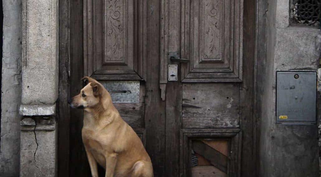 Cão esperando na frente de porta